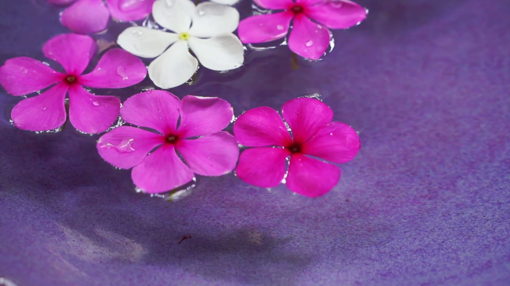 video-pink-flowers-floating-in-bowl-of-water-from-top-view-spa-decoration_vaj6fxqol__F0000